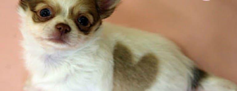 perros-pelo-corazon