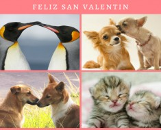 san-valentin-animal