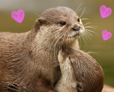 Animales en San Valentín