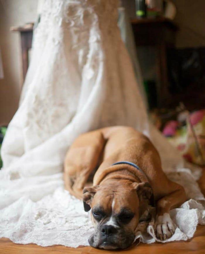 vestido-novia-perro