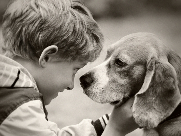 Beneficios de que un niño autista tenga perro