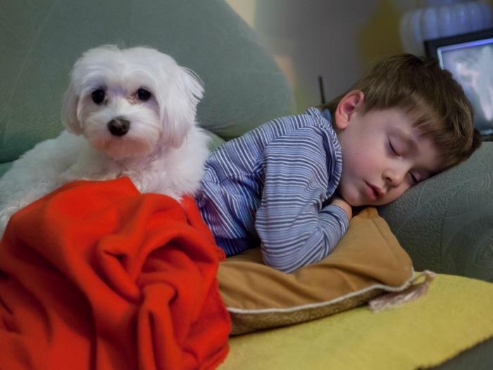 Perro y niño autista