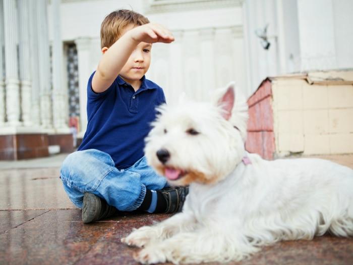Niño autista interactuando con perro
