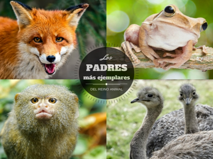 mejores padres animales