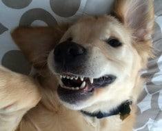 Perro con brackets