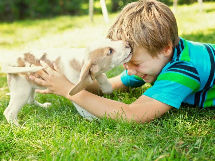Perros ayudan a niños autistas