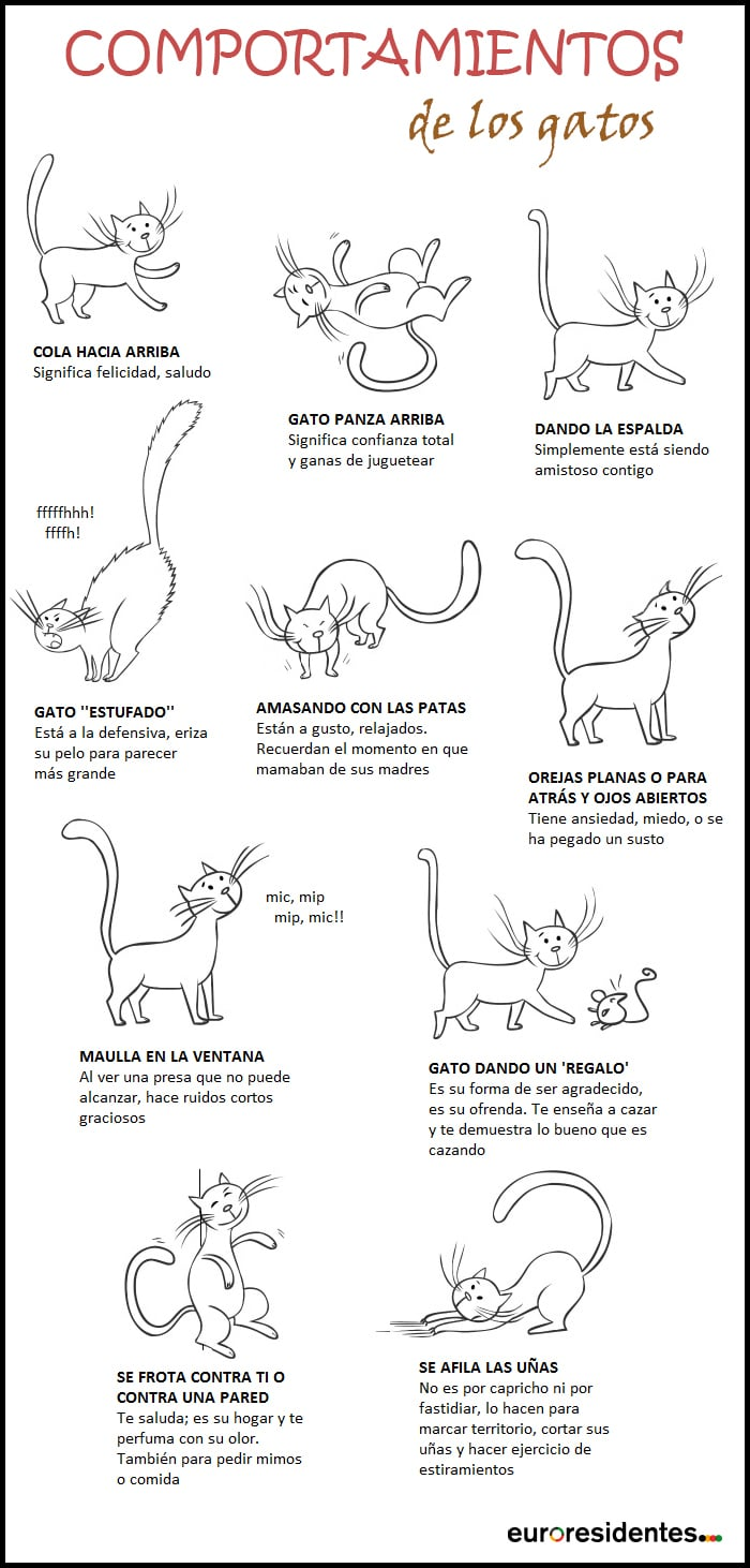 Comportamientos gatos