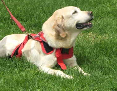 Dayko perro terremoto Ecuador