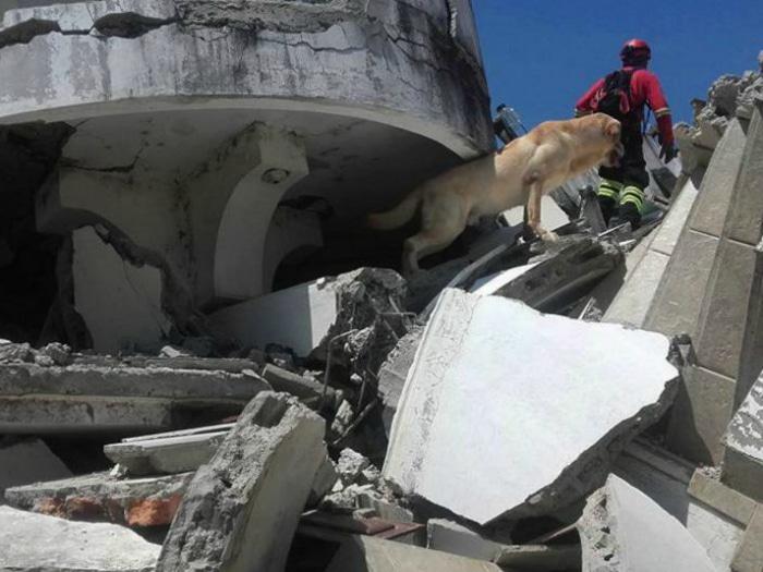 Dayko perro escombros
