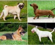 Cambios en razas de perros