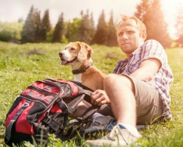 Consejos a tener en cuenta si vas a viajar con tu mascota
