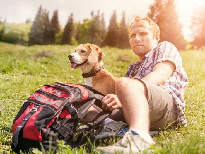 Viajar con mascotas tips