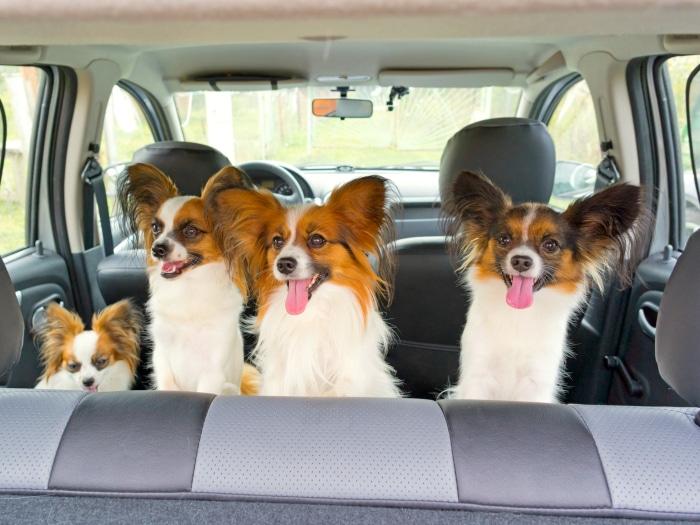 Viajar con perros y gatos