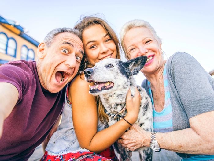 Viajar con perros y gatos consejos