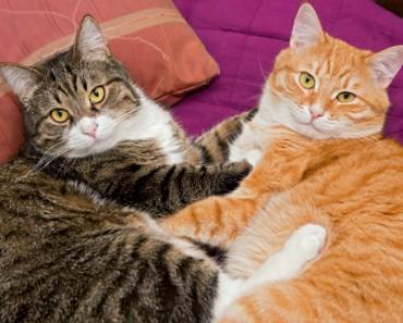 Gatos esterilización