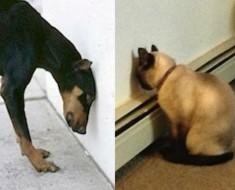 Perros y gatos cabeza pared