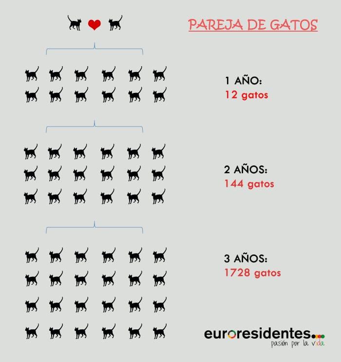Reproducción gatos