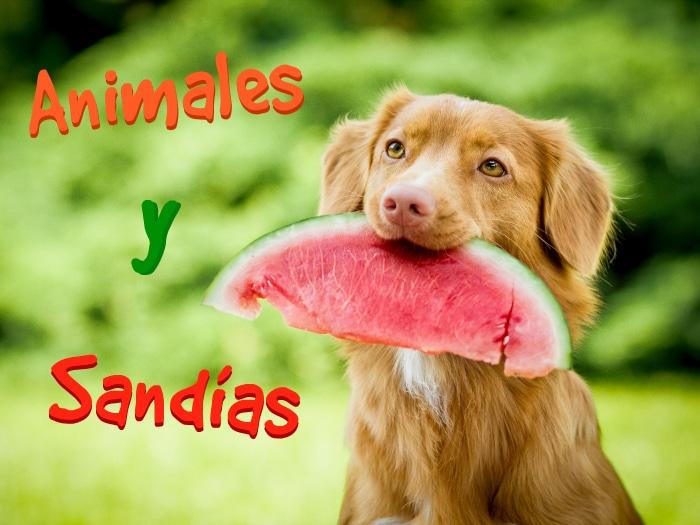 Animales con sandías