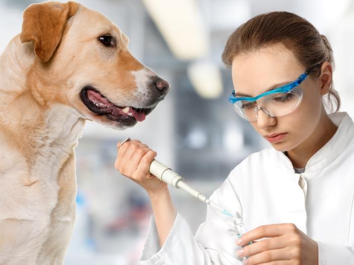 Perro olfato diabetes