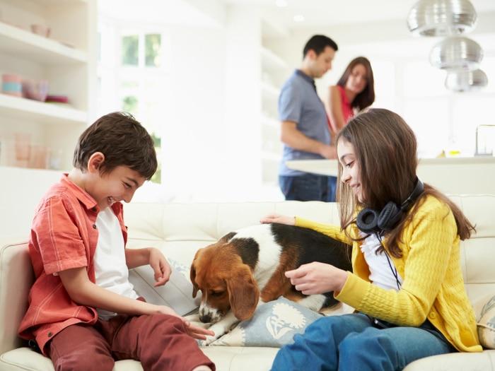Compartir custodia animales