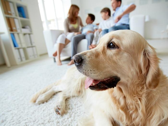Custodia compartida mascotas