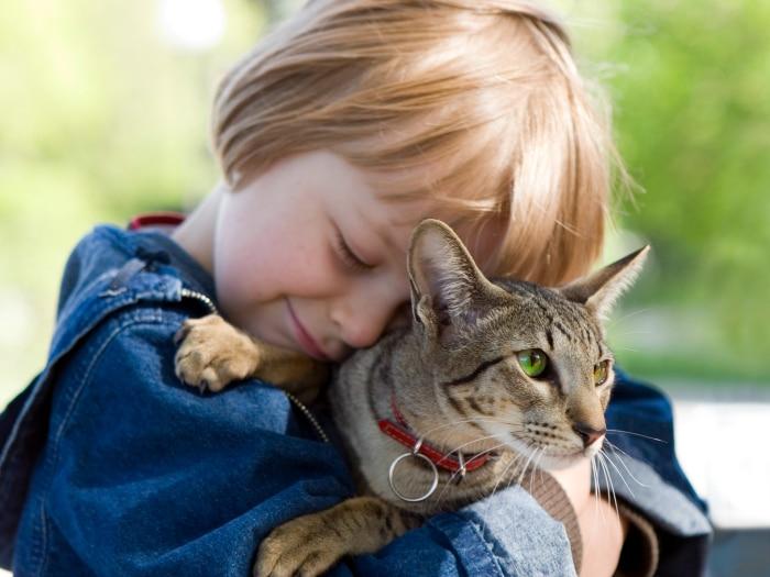 Niño y gato custodia