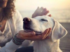 Compartir mascota con tu ex