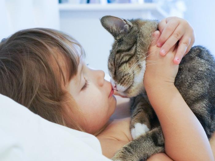 Gato custodia animales