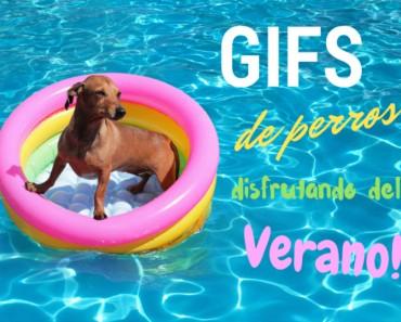 Gifs perros verano