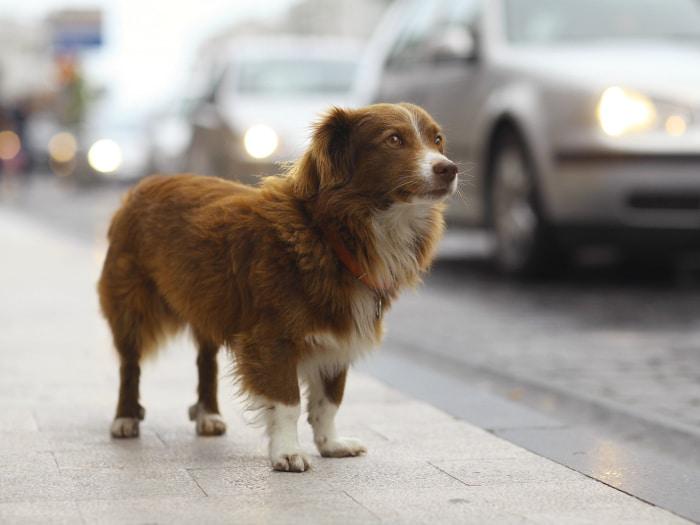 No al abandono o maltrato animal