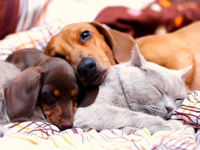 Cómo curar la sarna en perros, mascotas en casa