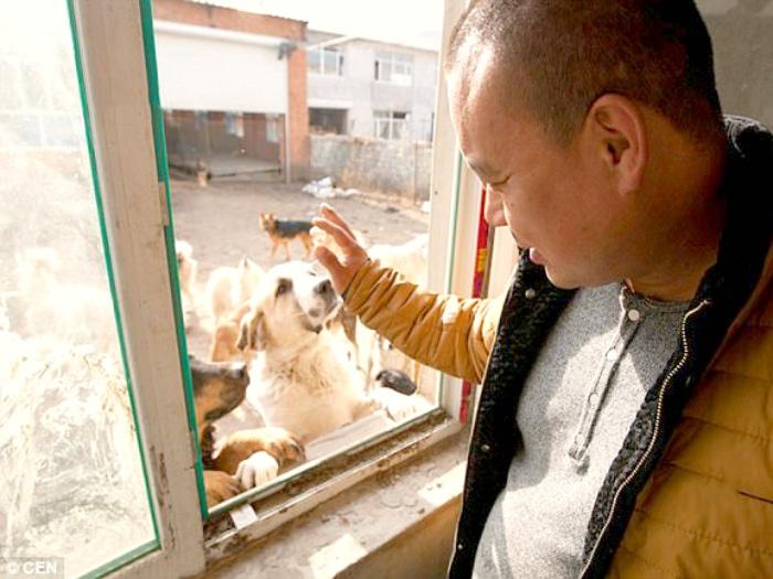 Chino millonario gasta fortuna salvando perros de granjas