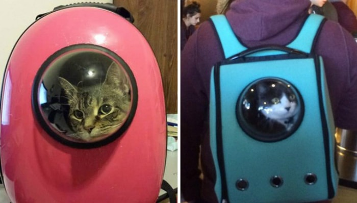 mochilas gatos burbuja