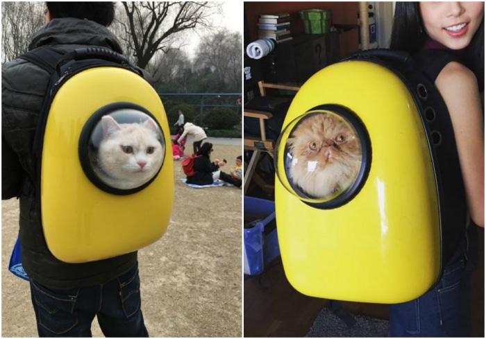 Mochilas burbuja gatos
