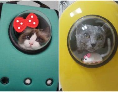 Mochilas gato burbuja