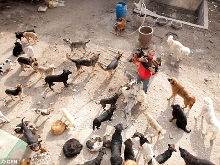 Wang Yan millonario salva  perros