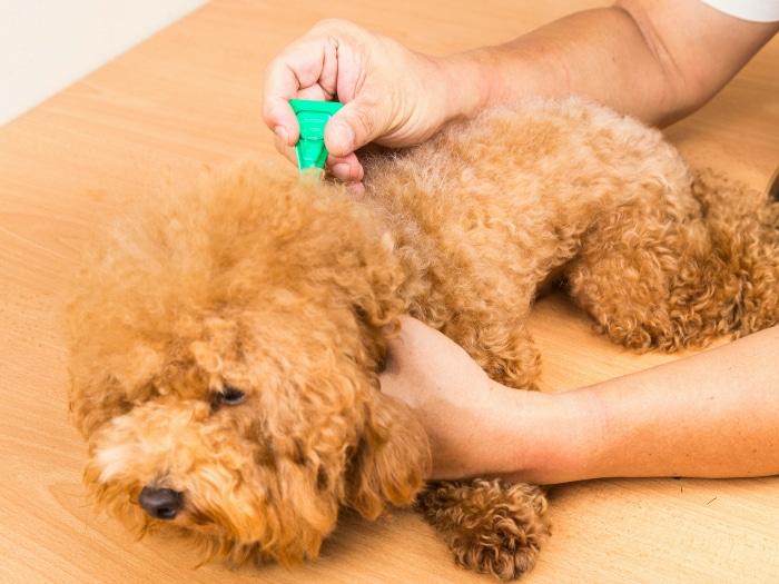 Pipeta pulgas garrapatas perros