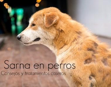 Cómo curar la sarna en perros, consejos y remedios caseros