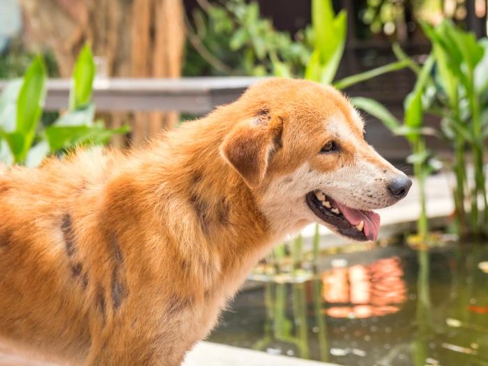 Cómo curar la sarna en perros, consejos y tratamientos caseros