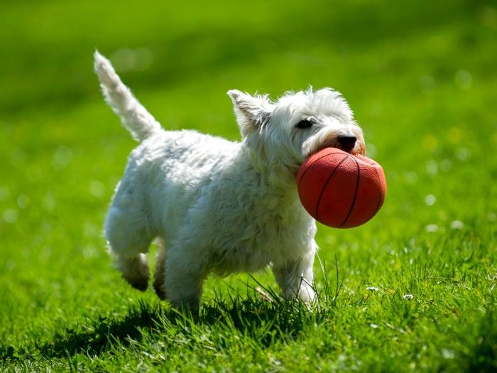 Cómo curar la sarna en perros, jugar y actuar con normalidad