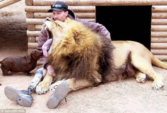 León y perro salchicha con cuidador