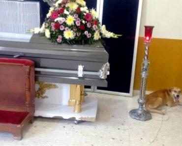 Bayron Max el perro que recorrió millas hasta llegar al funeral de su dueña