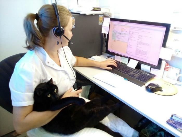 Lucifer el gato enfermero