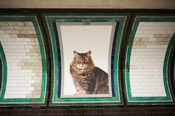 Carteles de gatos en el metro de Londres