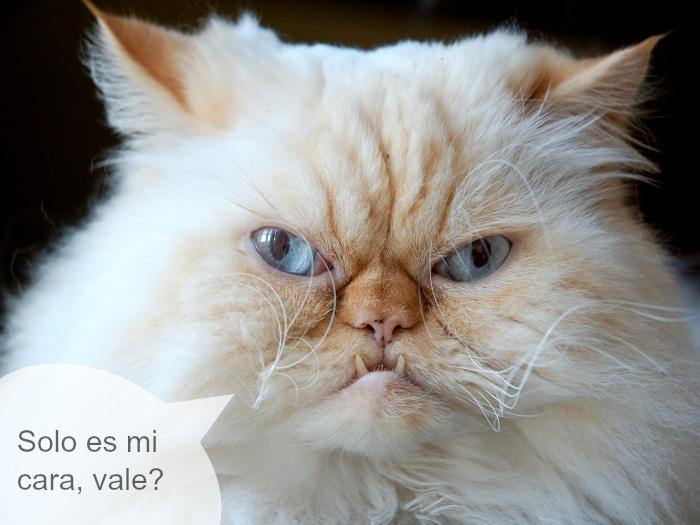 Mitos falsos gatos ariscos traicioneros