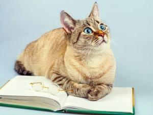 Creencias populares sobre los gatos