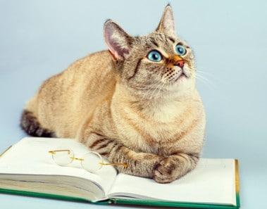 Mitos falsos gatos