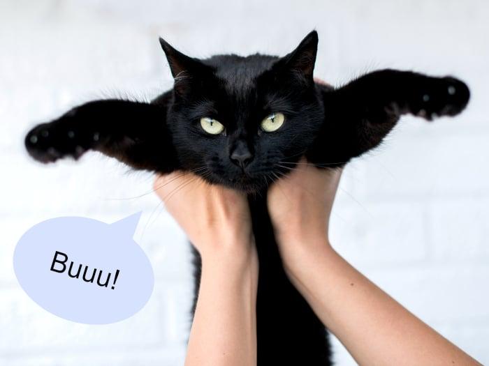 Mitos falsos gatos negros mala suerte