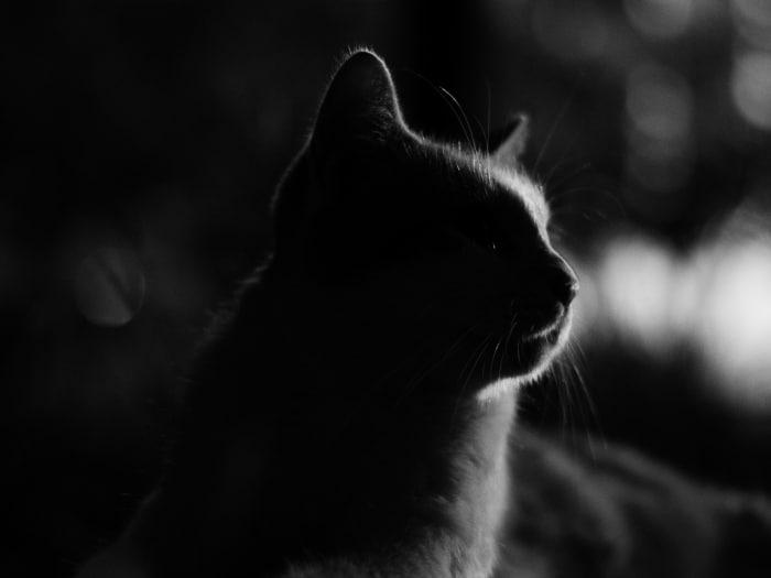 Mitos falsos gatos oscuridad