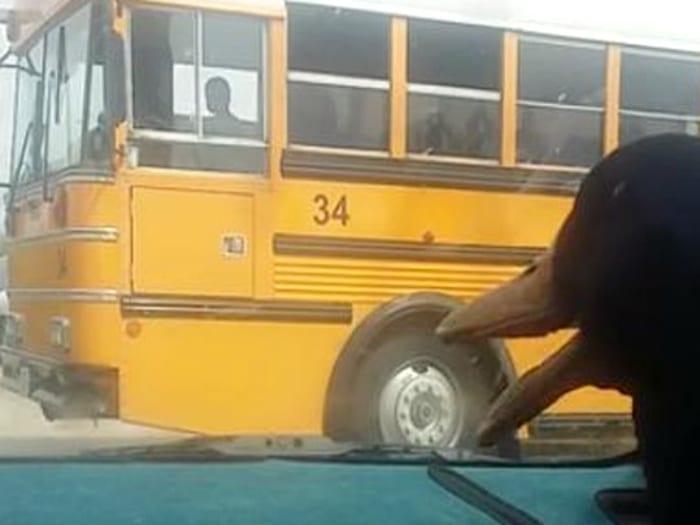 Pato espera a niño que llegue del colegio